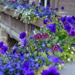 Vail-Mountain-Elegant-custom-flower-boxes