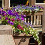 Vail-Mountain-Elegant-flower-boxes